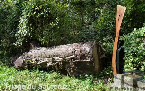 chene du SAUTERUZ Orzens 11-07-2015