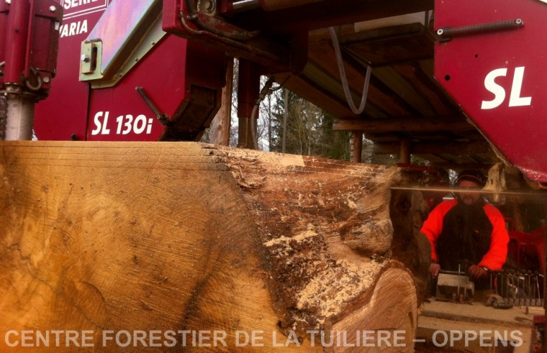 chene du SAUTERUZ Orzens - Debitage des planches 28-11-2015